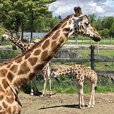 Parc Safari